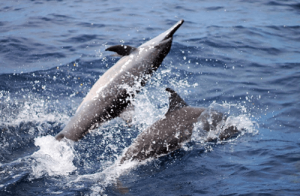 Dolphin Watching Magpalawantours 3