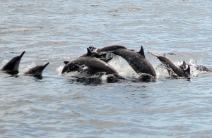 Dolphin Watching Magpalawantours 4